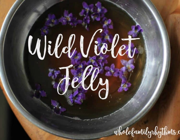 Recipe for Wild Violet Jelly made from foraged spring violets