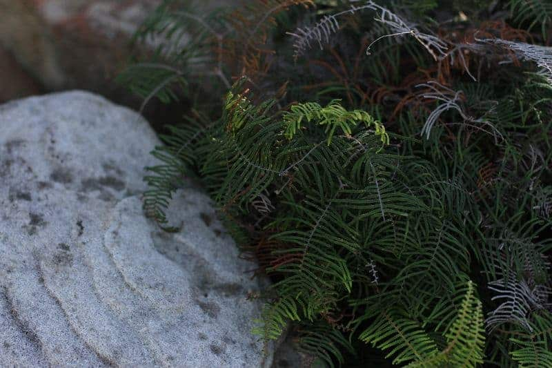 Bushwalking in Winter