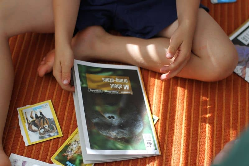 Child looking at the cover of a book about orangutans