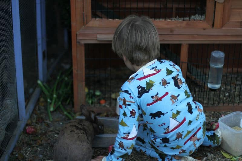 Daily Chores for Children - Feeding the Animals