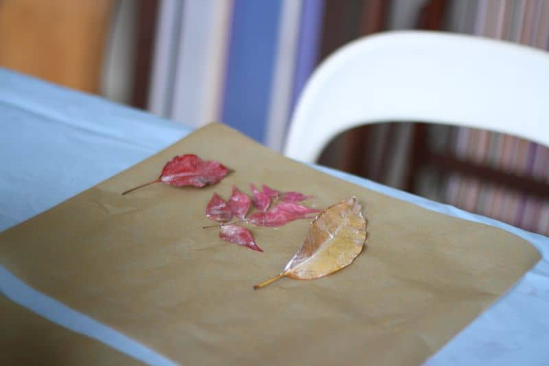 Leaves glued to paper for Nature Table